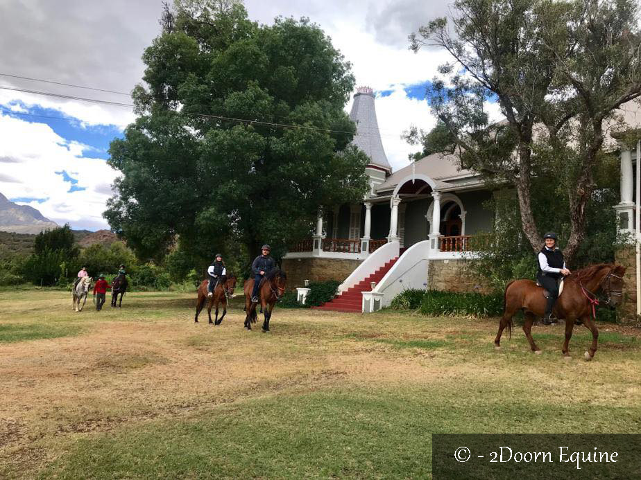 Horses on Lawns